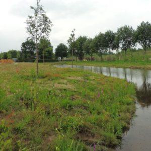 Oever van de vijver met verplante Rietorchissen en Kattenstaart