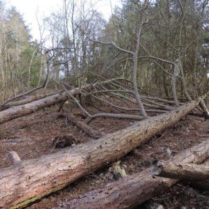 kris-kras hout