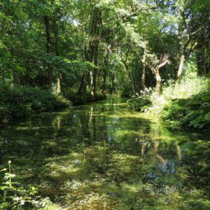 de fraai door het parkbos slingerende vijver