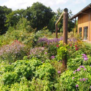 de zomerborders lokken veel vlinders en bijen